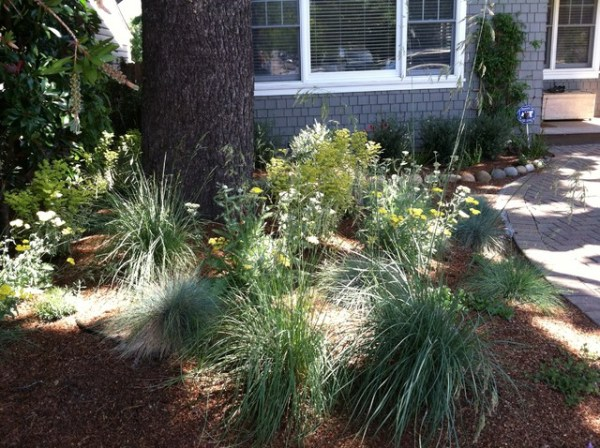 drought-tolerant garden - contemporary