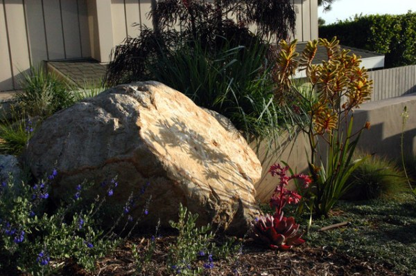 drought tolerant front yard - contemporary