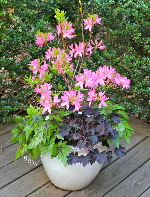 Container Flowers For Shade Flowers Ideas