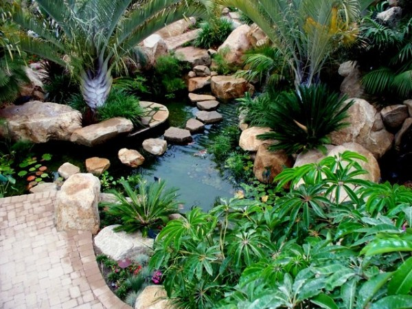 koi pond - tropical landscape