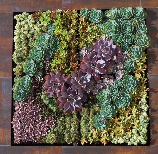 succulent wall - industrial