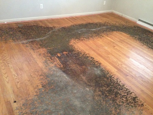 How to remove residue from under carpet from h/w floors?