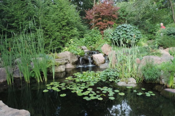 natural pond and stream
