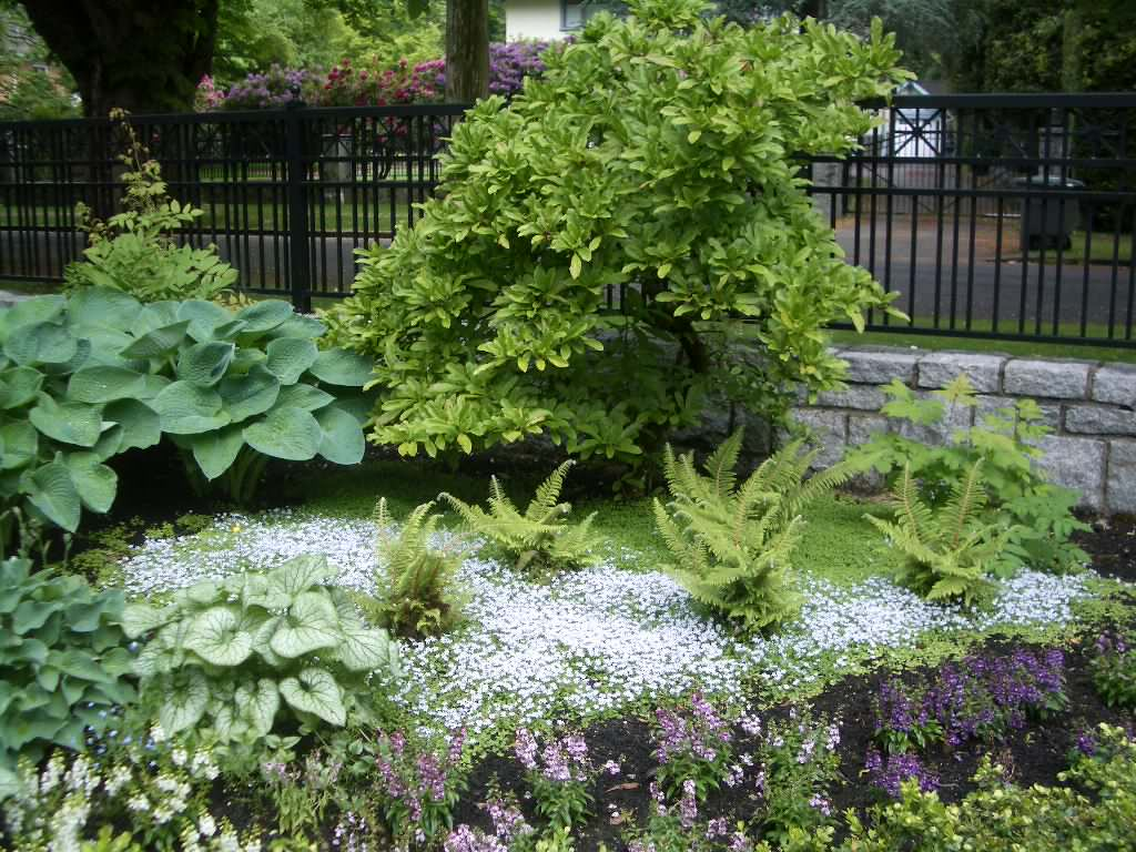 Zone 5 Perennials Lanedscaping Ideas Photos Houzz