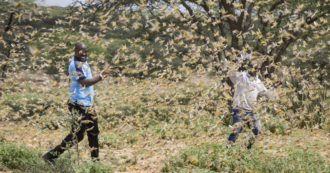 """Africa, """"invasion of millions of locusts. They devour food, farmers have lost everything"""