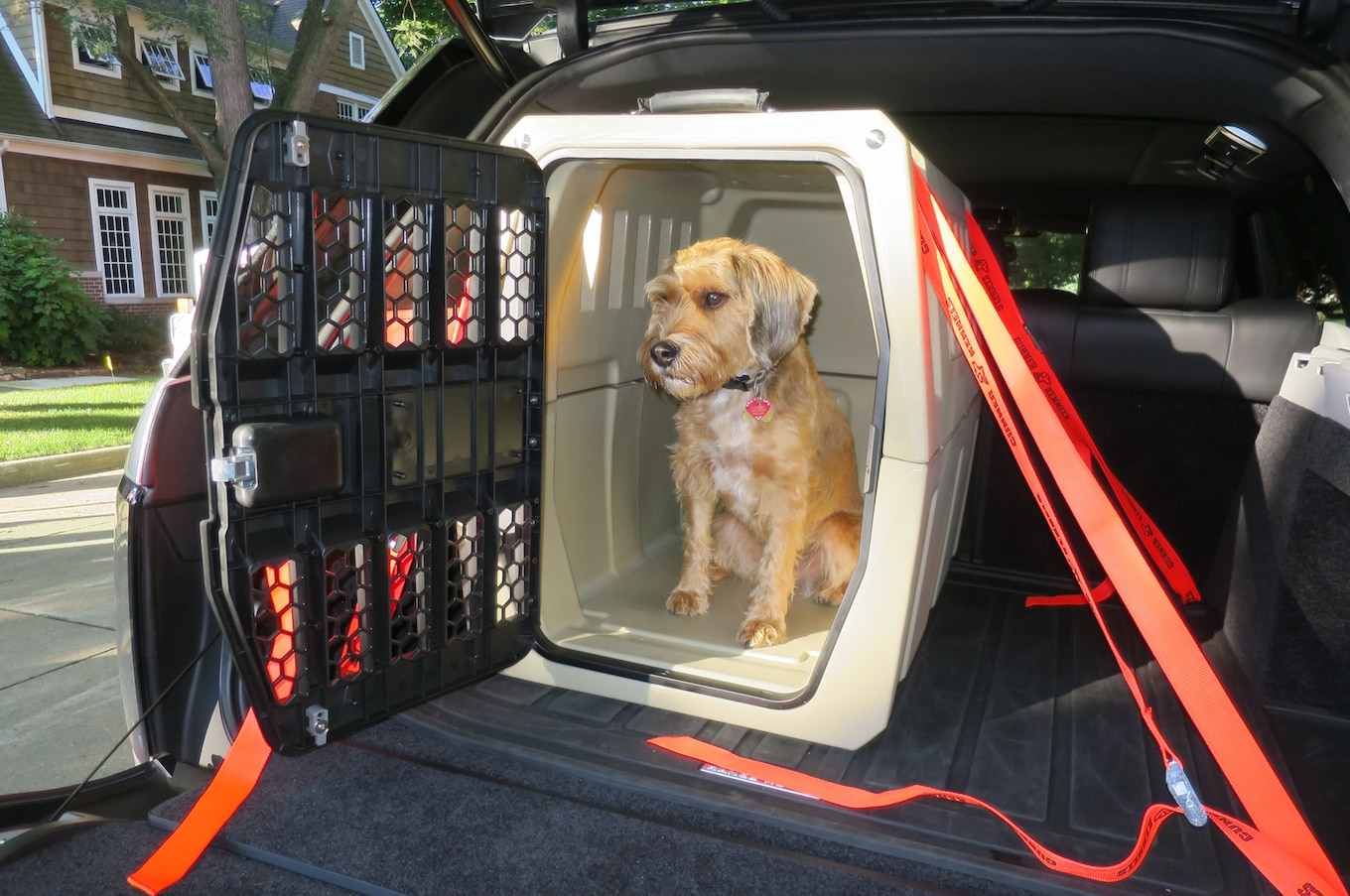 You re Probably Transporting Your Pooch All Wrong Technologue