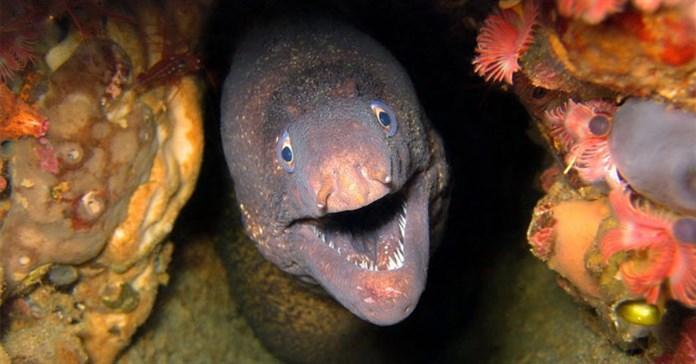 Những loài cá có khả năng đặc biệt nhất