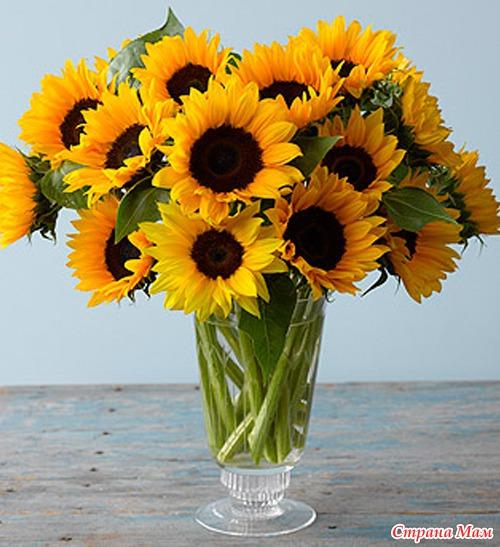 Air Apa Untuk Melati Cara Menyimpan Bunga Dalam Vas