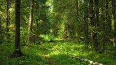 چگونه برای حفاظت از جنگل