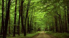 چگونه جنگل را نگه داریم