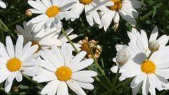 نحوه محافظت از گیاهان