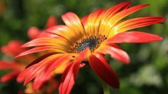 Come fa l'impollinazione dei fiori