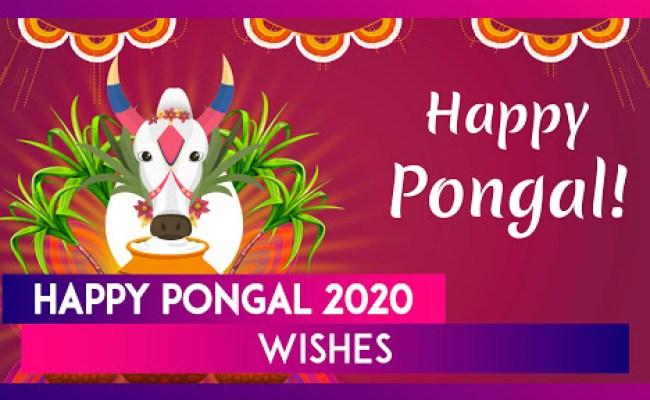 Happy Pongal 2020 Greetings Images Mattu Pongal