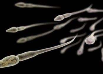 Father's X chromosome holds clues to autoimmune disease in women   TheHealthSite.com