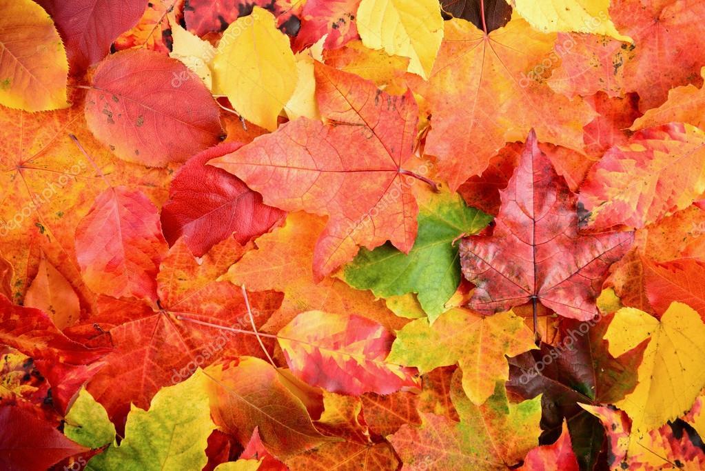 Autumn Fall Live Wallpaper Herfst Herfstbladeren Achtergrond Stockfoto