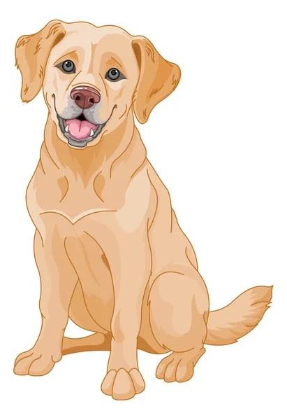 Yellow Lab Cartoon : yellow, cartoon, Labrador, Retriever, Vector, Images,, Royalty-free, Vectors, Depositphotos®