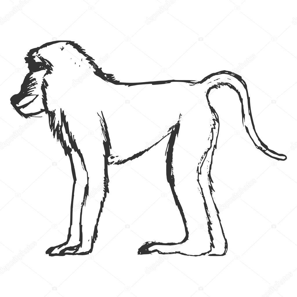 Ru N Kreslenou Grunge Skica Ilustrace Pavian