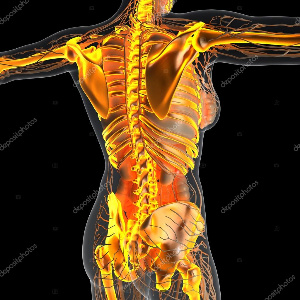 Science Anatomy Of Human Body In X Ray With Glow Skeleton