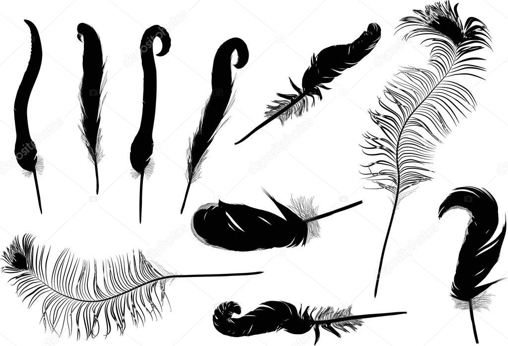 羽毛剪影 — 圖庫矢量圖像© Dr.PAS #55582951