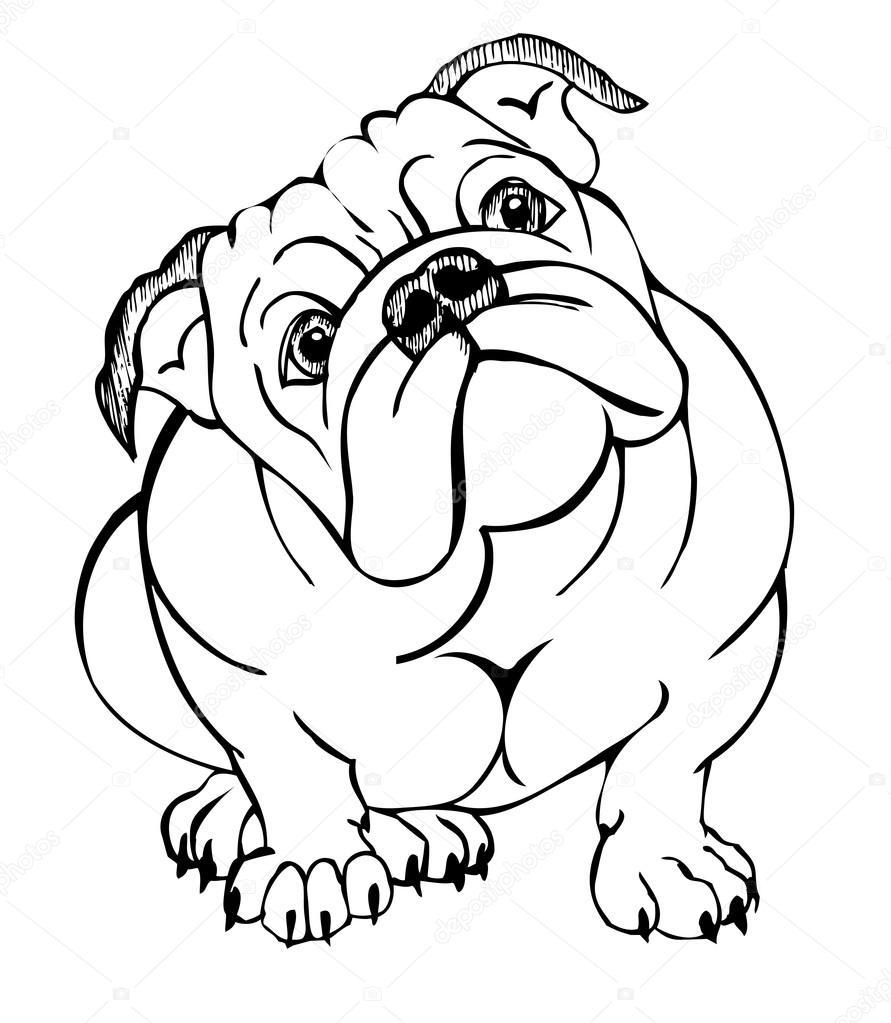 bulldog inglés blanco — Archivo Imágenes Vectoriales
