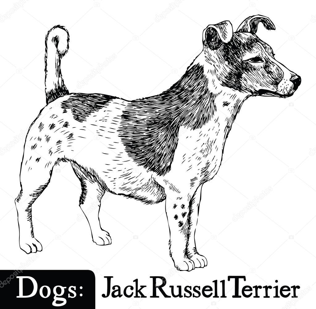 Hond Schets Stijl Jack Russell Terrier