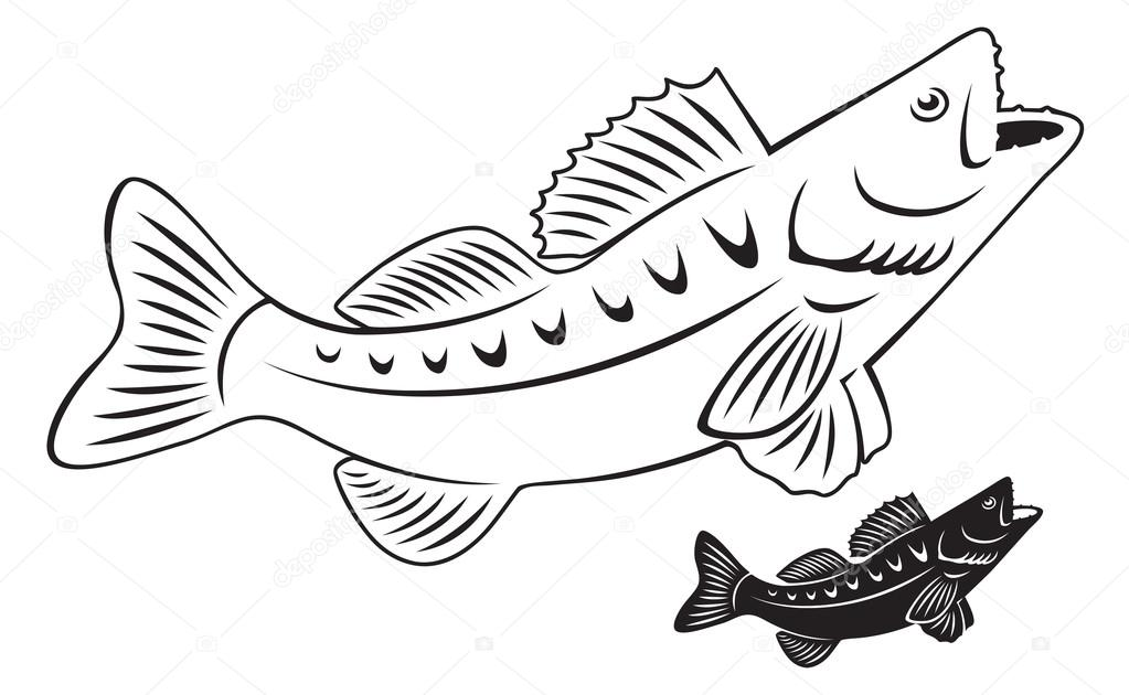 Outline of perch fish — Stock Vector © kvasay #69652039