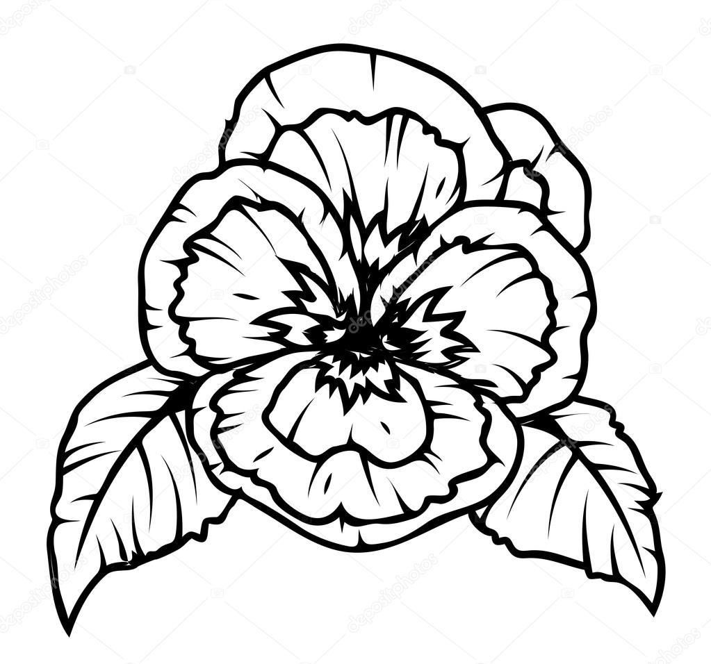 Poppy Flower Drawing — Stock Vector © baavli #64338691