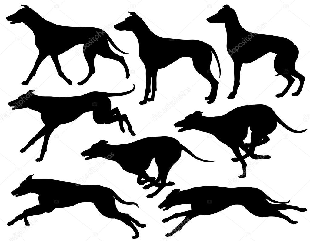Greyhound Running Clip Art