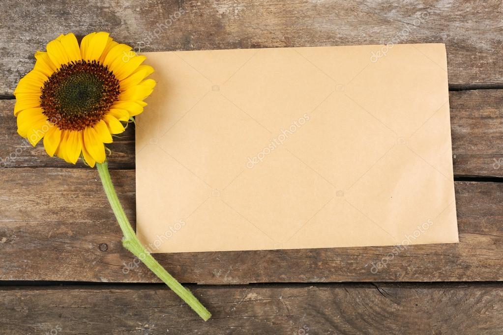 3d Sunflower Wallpaper Cart 227 O Em Branco Com Um Lindo Girassol Stock Photo