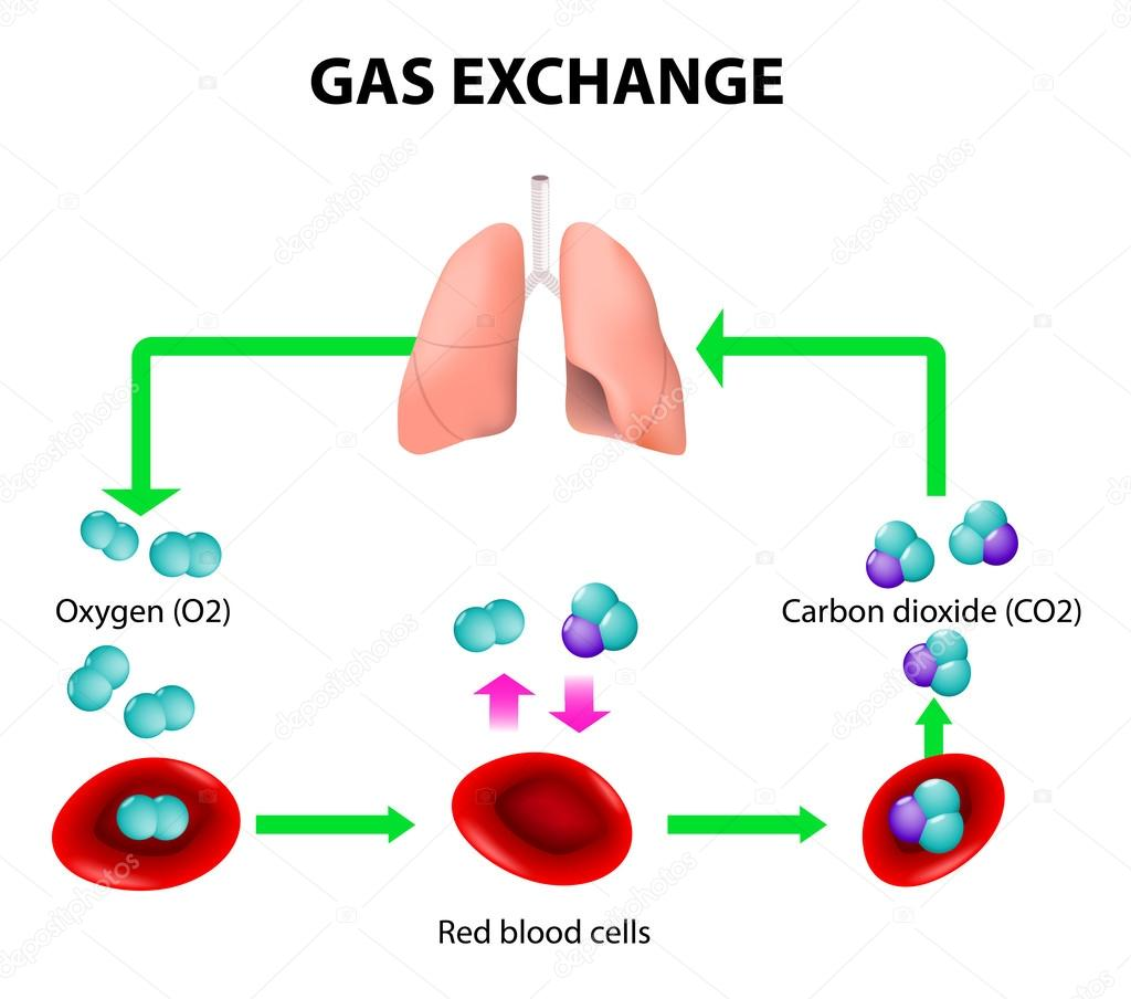 hight resolution of gas exchange stock vector