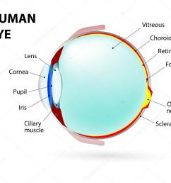 schematic diagram of the eye human anatomy labeled vector by  [ 1023 x 884 Pixel ]