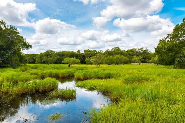 florida natural landscape