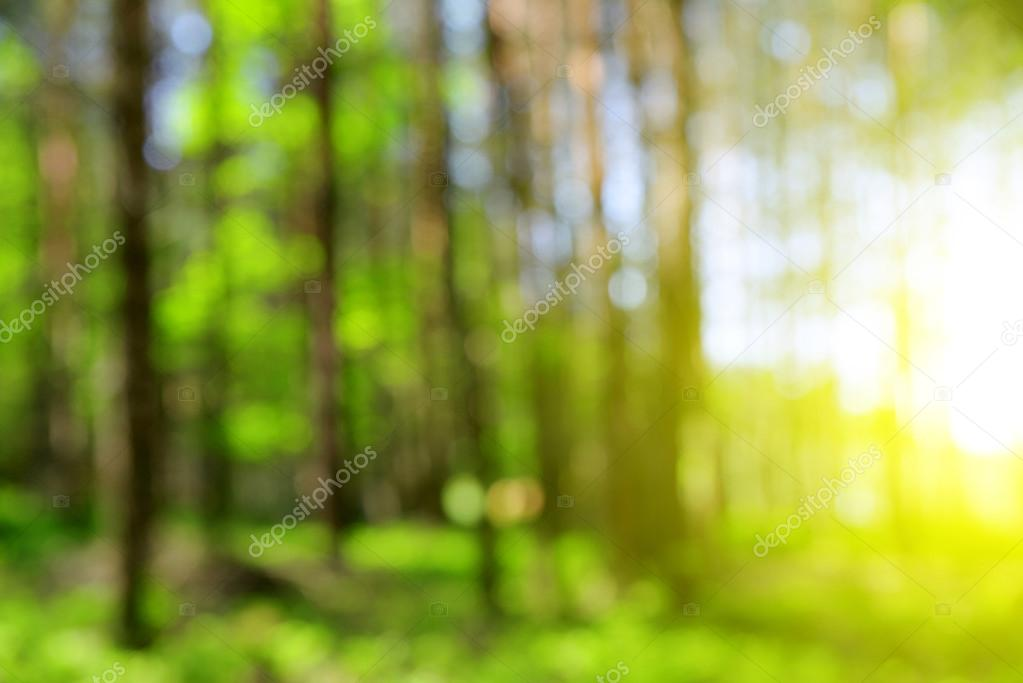 Green Natural Background Of Out Of Focus Forest Stock