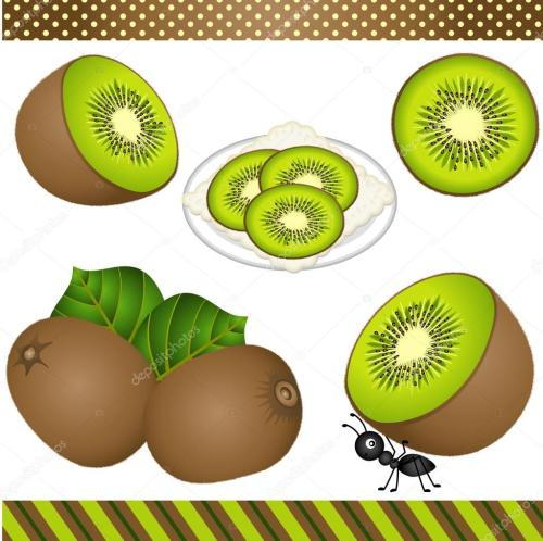small resolution of kiwi digital clipart stock vector
