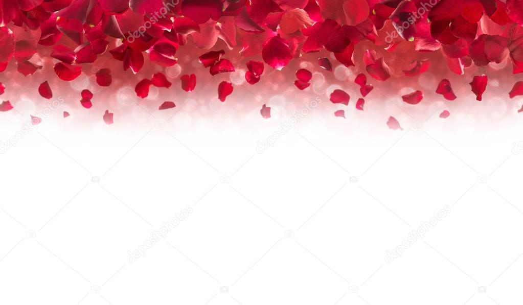 Sakura Falling Live Wallpaper Red Rose Petals Top Border Stock Photo 169 Designnatures