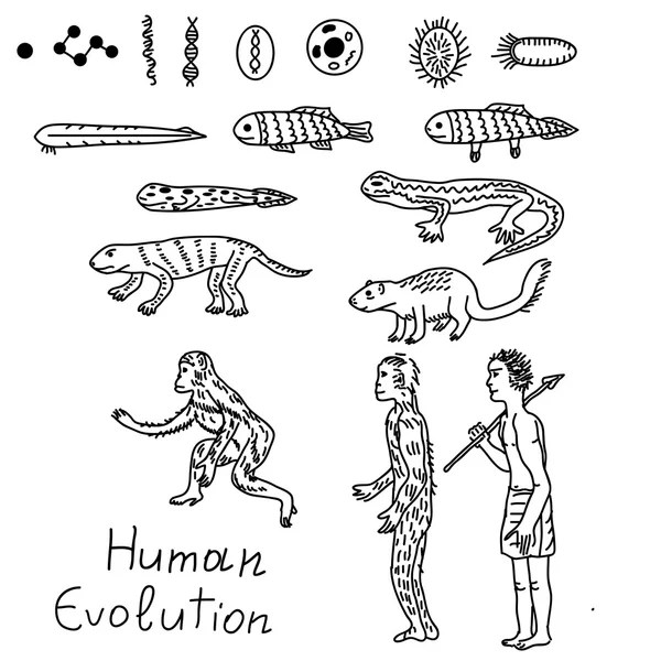 Human Evolution Coloring Coloring Pages