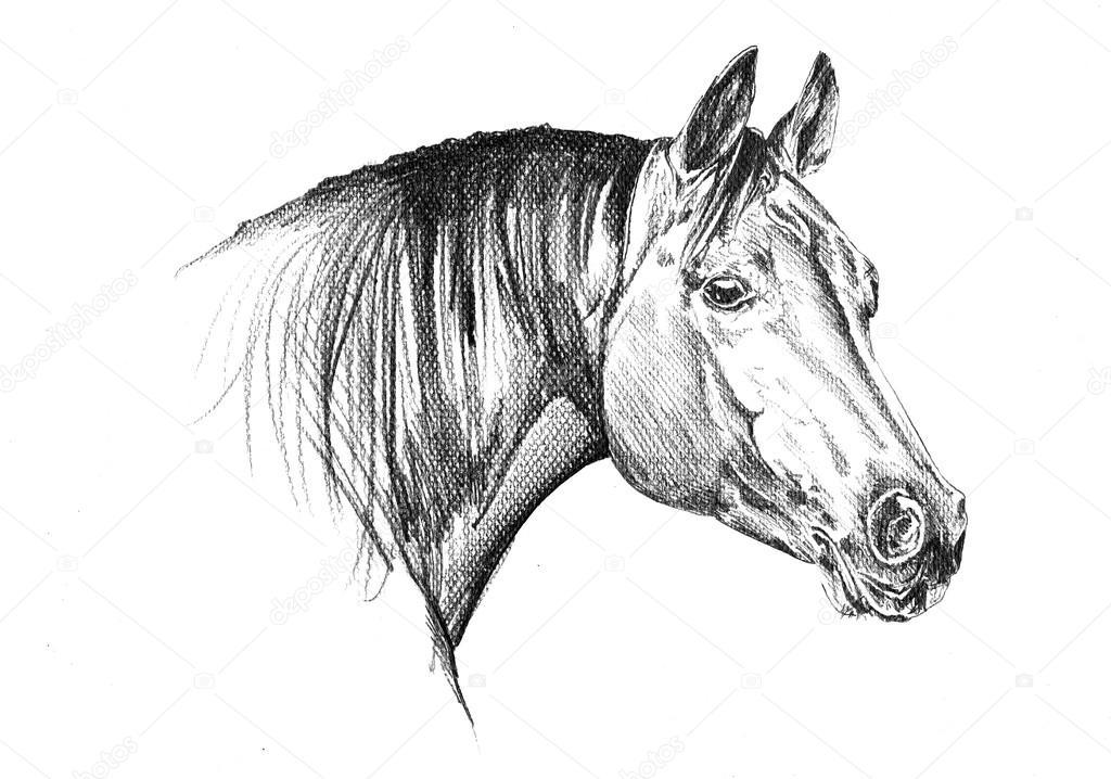 dessin au crayon à main levée cheval tête — Photographie