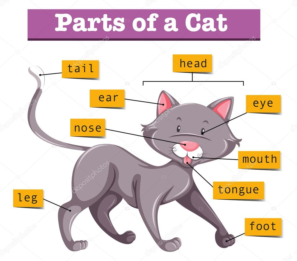 hight resolution of diagram showing parts of cat illustration vector by