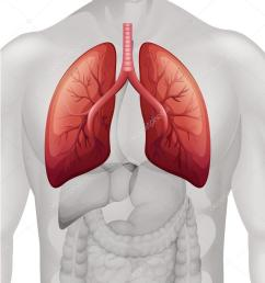 lung cancer diagram in human stock vector [ 831 x 1023 Pixel ]