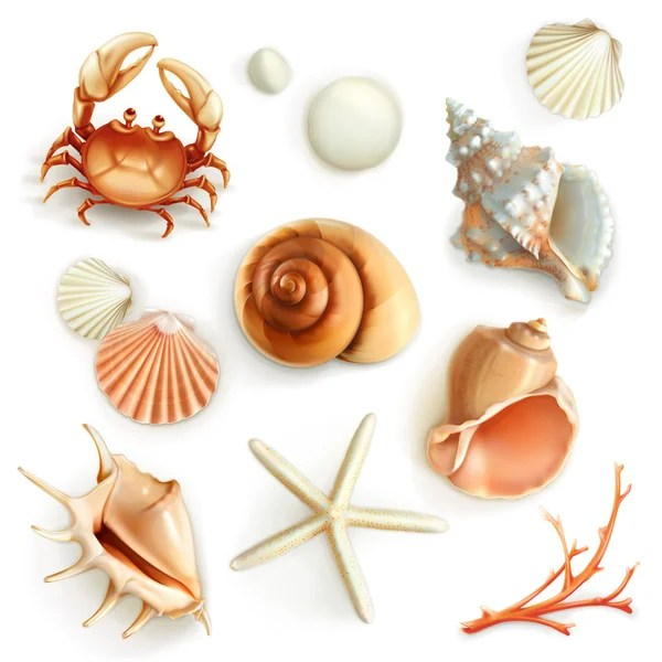 Áˆ Seashells Drawing Stock Illustrations Royalty Free Seashells Drawings Download On Depositphotos