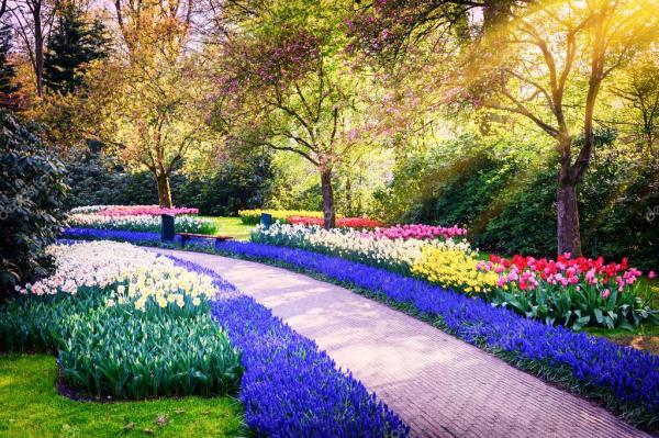 paesaggio di primavera fiori