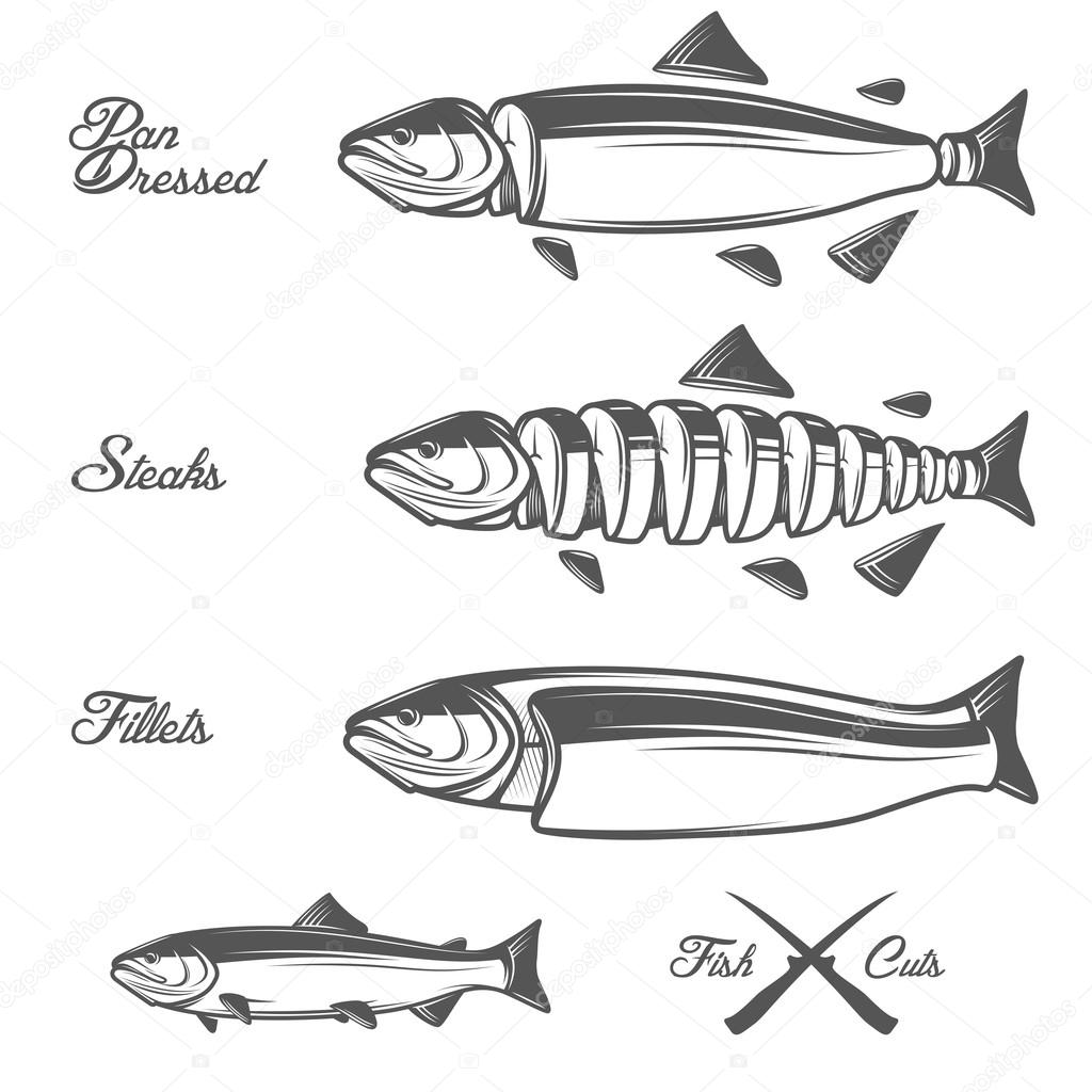 hight resolution of salmon cuts diagram whole fish pan dressed fillets and steaks stock vector
