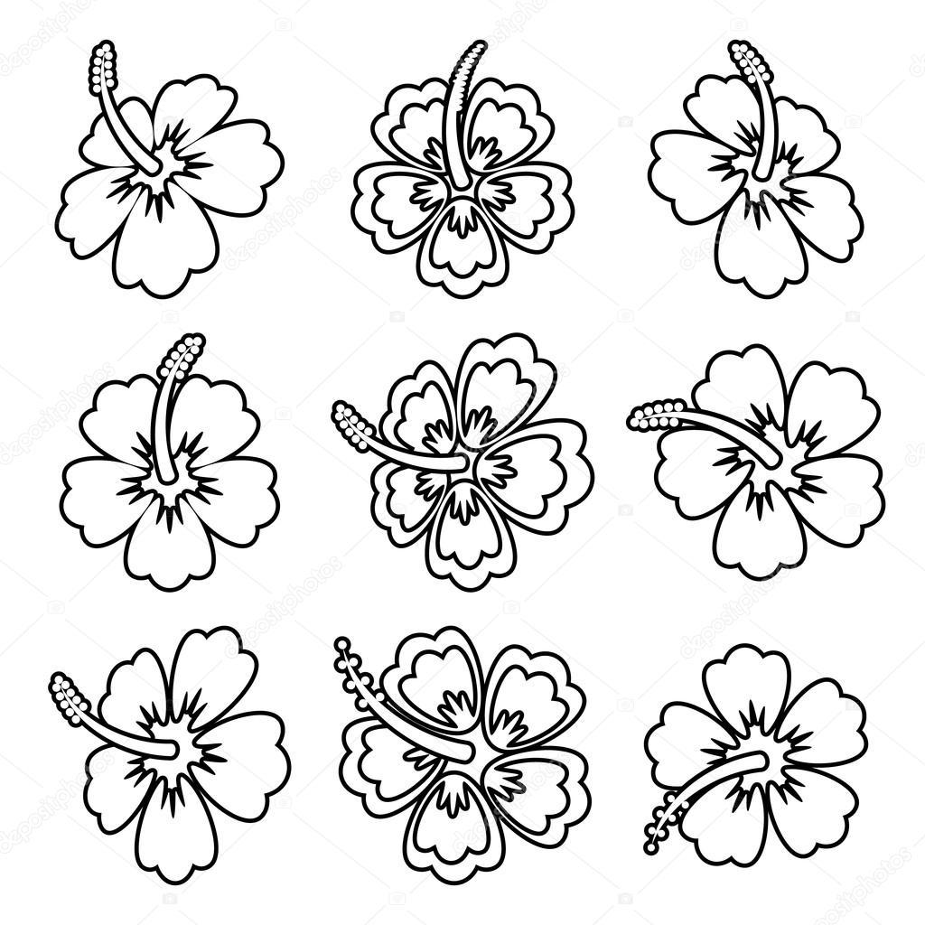 Iconos De Vector Hibisco Flor Contorno