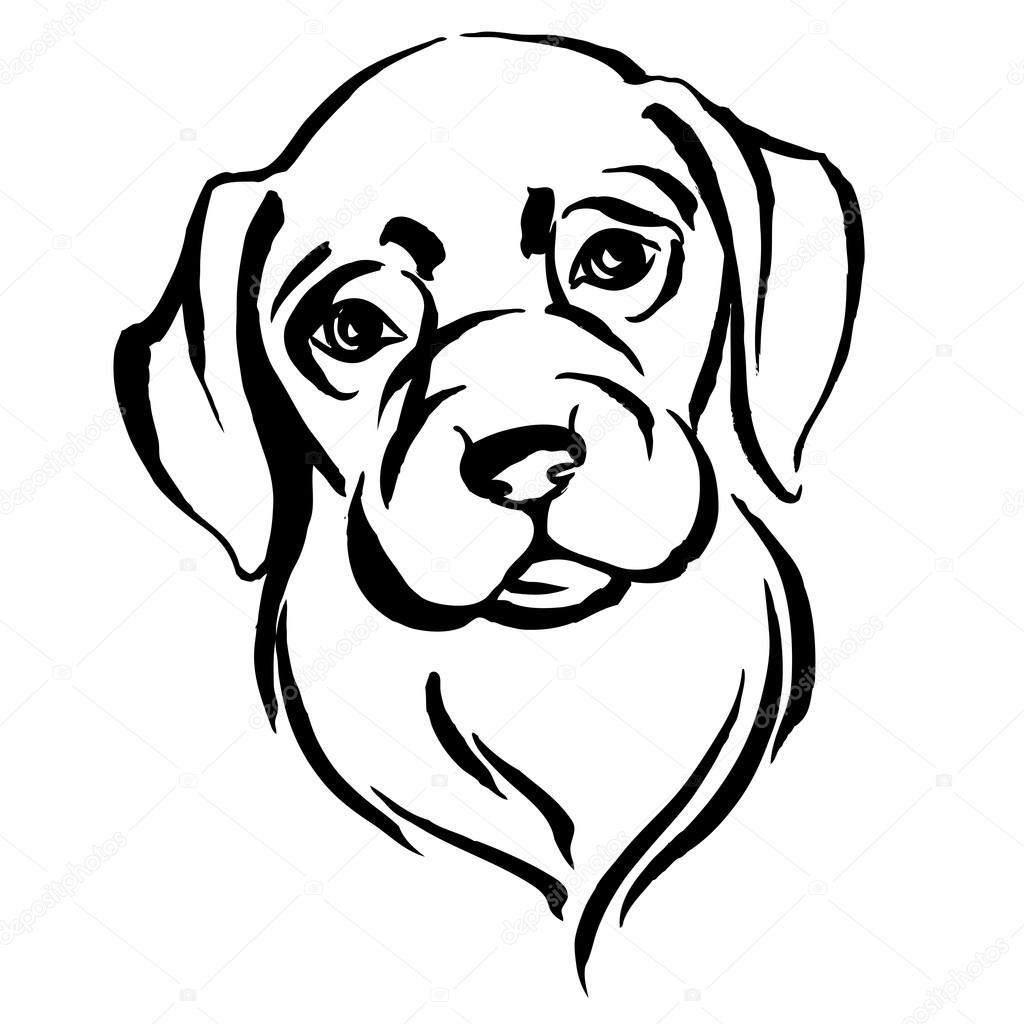 Hand Gezeichnete Portrat Von Hund Labrador Schwarz