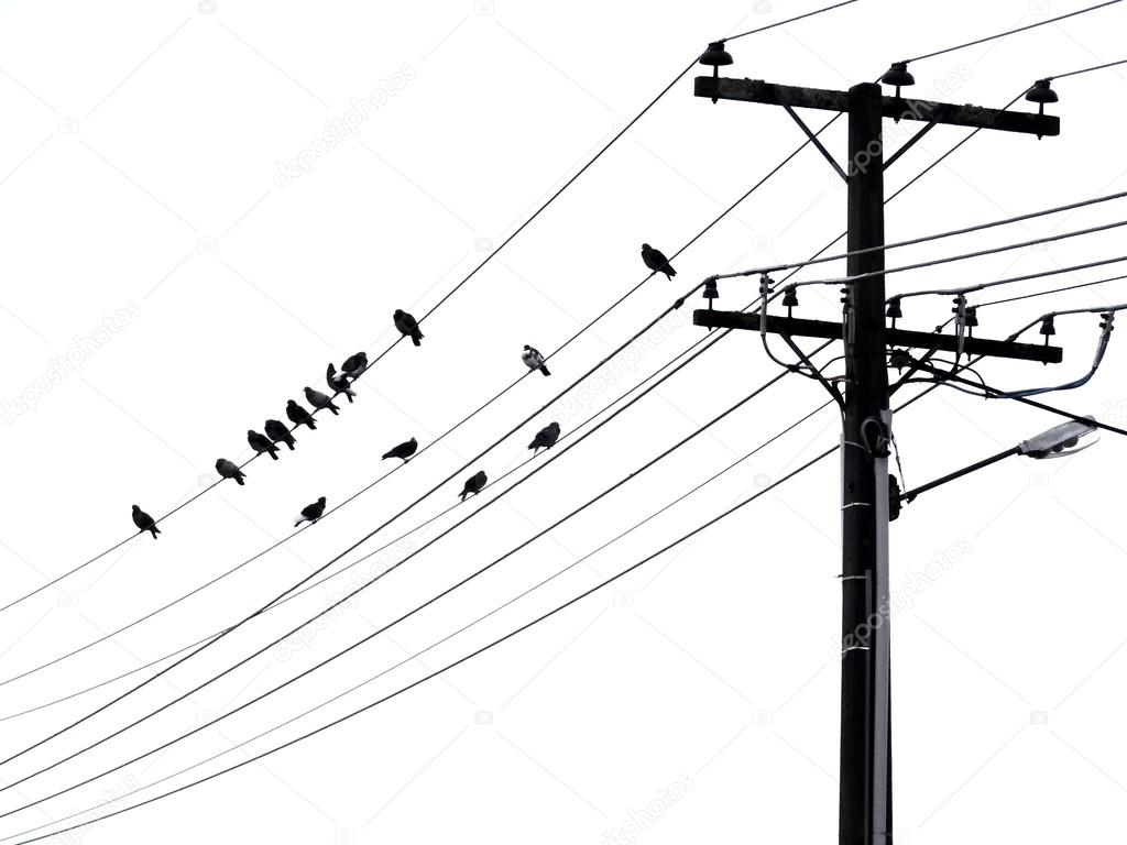 Black And White Silhouette Of Small Birds Perching On