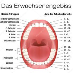 Tooth Layout Diagram Ideas Zähne Namen Eruption Diagramm Deutsch — Stockvektor © Furian #76988799