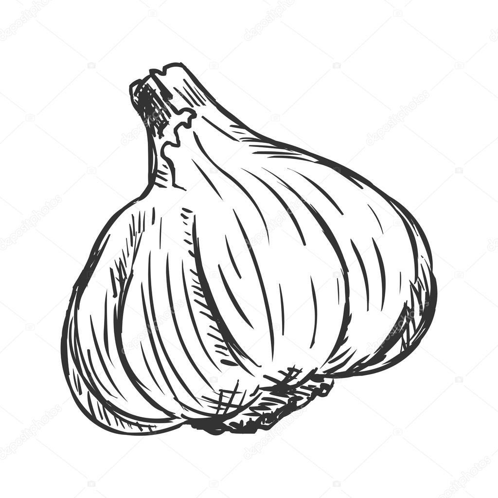 Single Sketch Garlic — Stock Vector © nikiteev #63402105