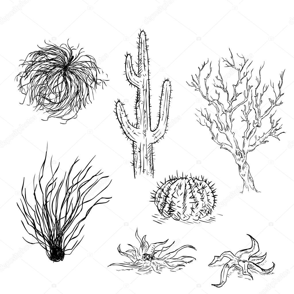 Ensemble De Croquis Cactus Et Plantes Du Desert