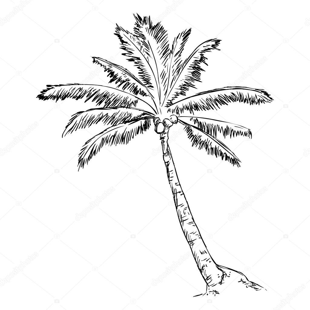 Sketch Palm Tree — Stock Vector © nikiteev #83500384