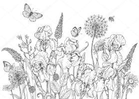 Malvorlage Wiesenblumen   Coloring and Malvorlagan